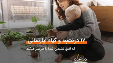 تصویر ۱۷ درختچه و گیاه آپارتمانی که اتاق نشیمن شما را سرسبز میکند
